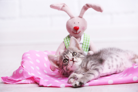 Cute gray kitten with toy rabbit on floor at home Stock Photo