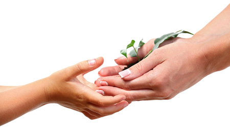 Female and child handfuls with soil and small green plant isolated on white Foto de archivo - 102265518