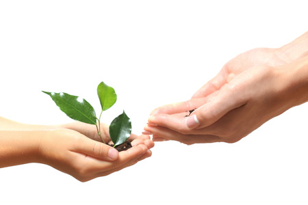 Female and child handfuls with soil and small green plant isolated on white Stock Photo