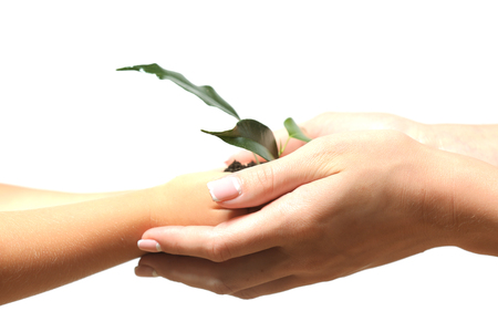 Female and child handfuls with soil and small green plant isolated on white Foto de archivo - 102265858