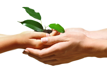 Female and child handfuls with soil and small green plant isolated on white Foto de archivo - 102265866