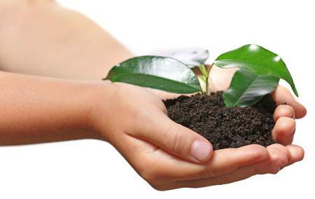 Child handful with soil and small green plant isolated on white Foto de archivo - 102251953