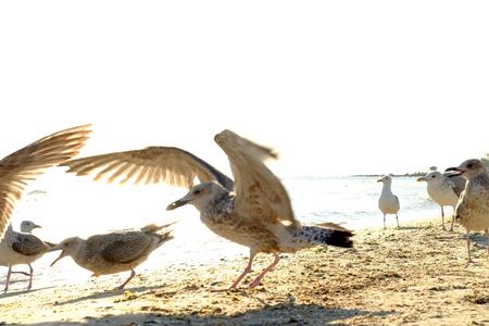 Seagulls on the seashore