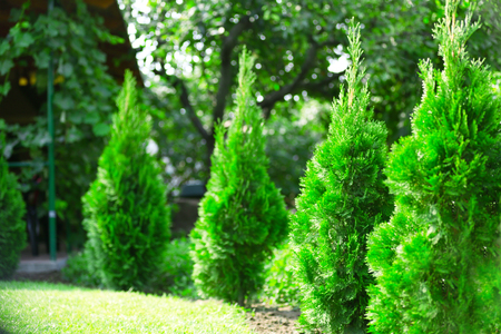 Beautiful bushes in garden 免版税图像