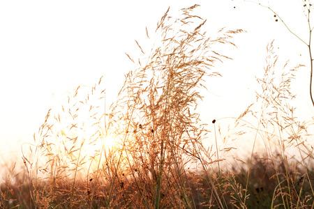 Field grass on white sky blurred background 免版税图像