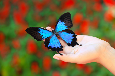 Colorful butterfly in female hand, close-up Foto de archivo - 102653302