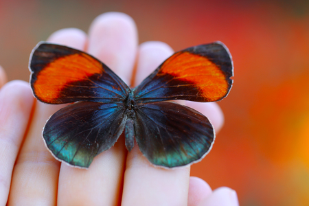 Colorful butterfly in female hand, close-up