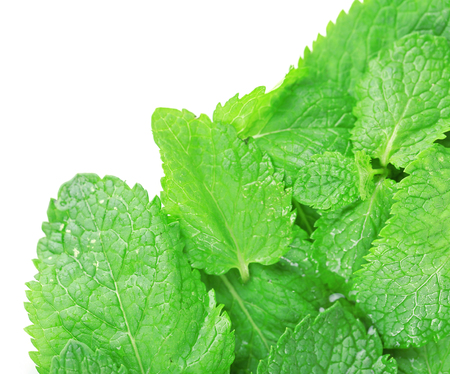 Aromatic fresh mint isolated on white