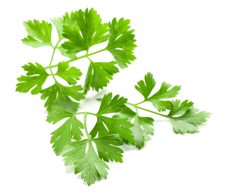 Fresh parsley isolated on white Banco de Imagens
