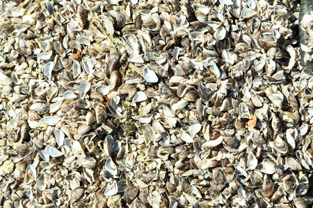 Sea shells background 免版税图像