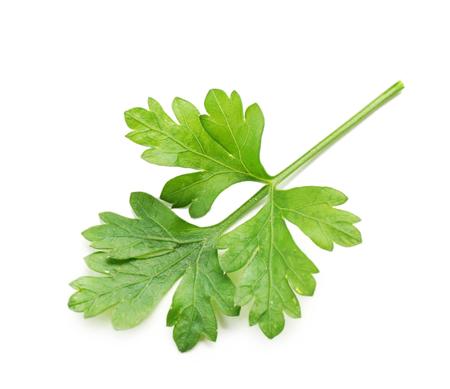 Fresh parsley isolated on white Zdjęcie Seryjne