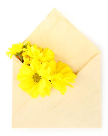 Yellow chrysanthemum in envelope, isolated on white Reklamní fotografie