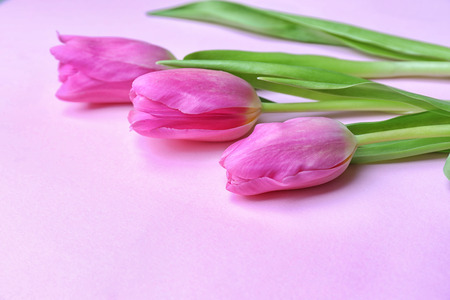 Beautiful fresh tulips on color background