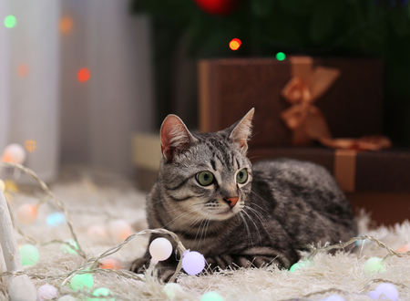 Beautiful cat near Christmas tree with decoration