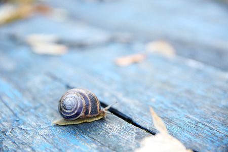 Garden snail on wooden background
