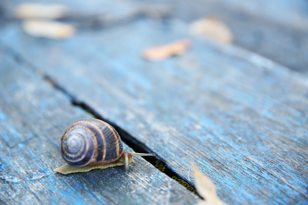 Garden snail on wooden background Imagens - 103291544