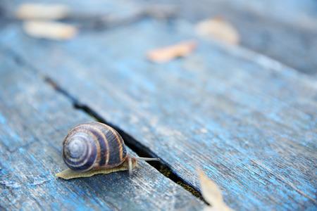 Garden snail on wooden background