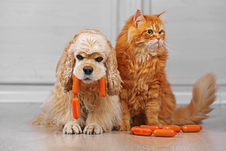 American cocker spaniel and red cat with sausage on floor in room Stockfoto