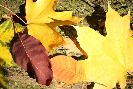 Autumn leaves on the wooden background Stock Photo