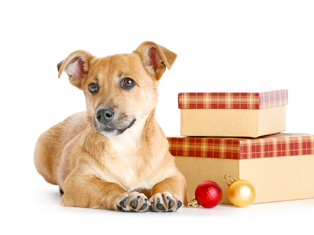 Small funny cute dog with gifts and Christmas toys, isolated on white Stock Photo