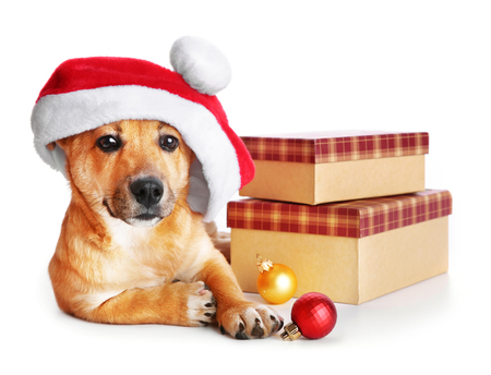 Small cute funny dog in Santa hat with boxes and Christmas toys, isolated on white