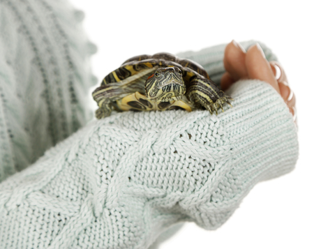 Turtle in woman hands, close up Stock Photo