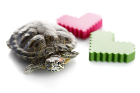 Turtle with plastic hearts isolated on white background Stock Photo
