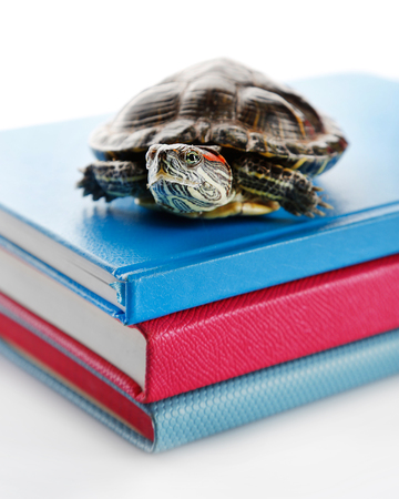 Turtle on pile of colourful books against white background Stock Photo
