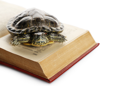 Turtle on opened book against white background, close up Stock Photo