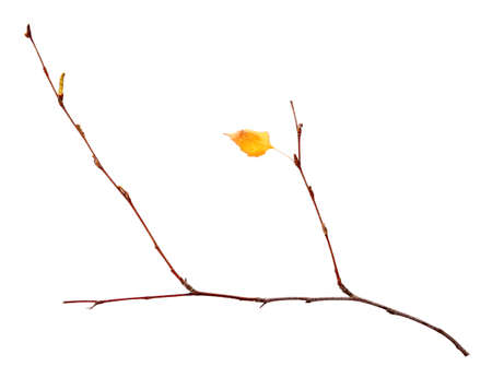 Branch with dry leaf, isolated on white