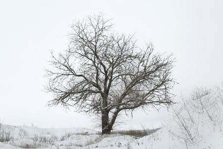 Single tree on winter field Stock Photo