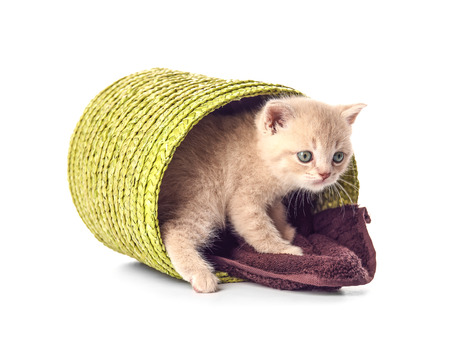 Small cute kitten in wicker basket, isolated on white Imagens