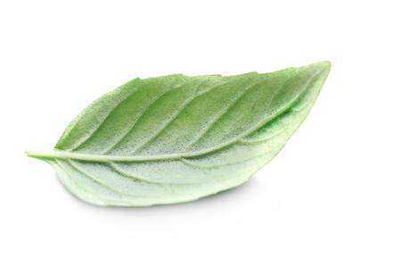Basil leaf, isolated on white