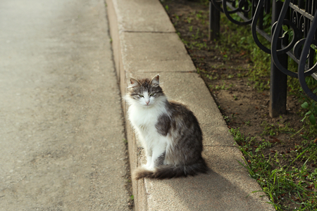 Cute cat on street