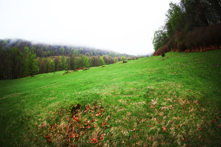 Beautiful green forest meadow 免版税图像