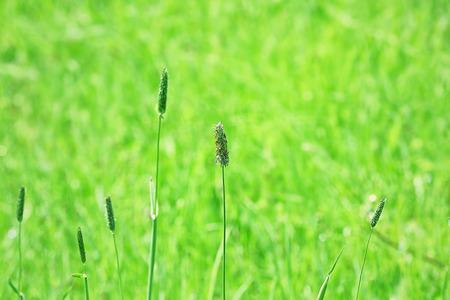 Green grass, closeup