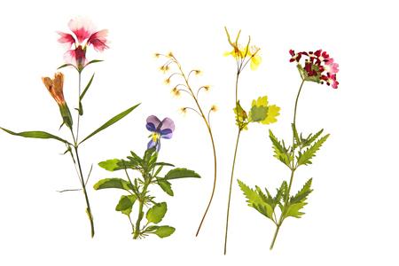 Hermosas flores secas aisladas en blanco Foto de archivo