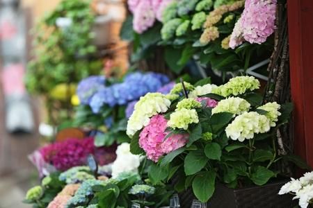 Colorful blooming flowers in a shop Zdjęcie Seryjne