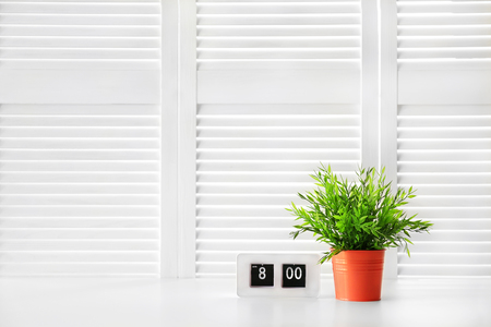 Green plant on white folding screen background