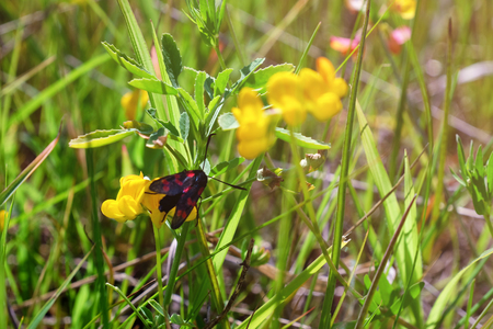 Small bug on yellow wildflower on grass background Imagens