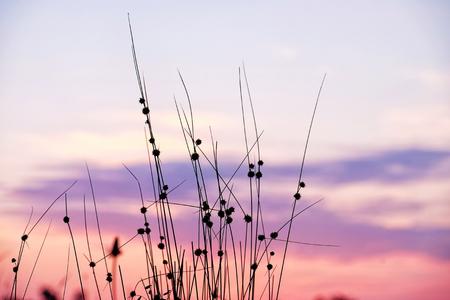 Wild meadow grass on sunrise sky background Reklamní fotografie