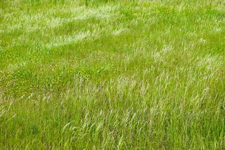 Green field grass background