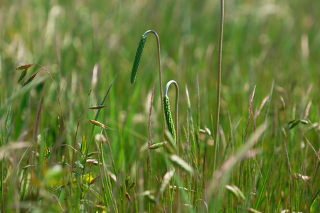 Beautiful summer meadow grass on blurred nature background Imagens