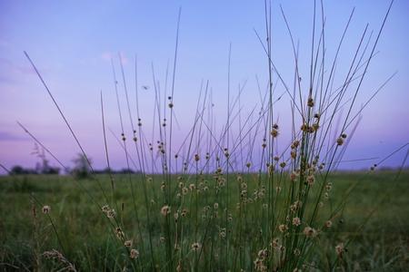 Wild meadow grass on light sky background Reklamní fotografie