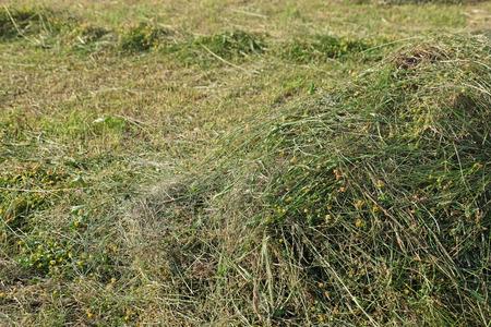 Pile of cut wildflower in field Imagens