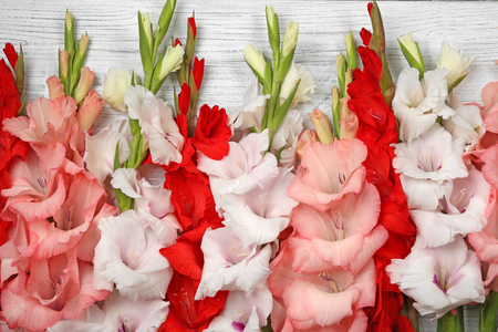 Beautiful gladiolus flowers on  wooden background