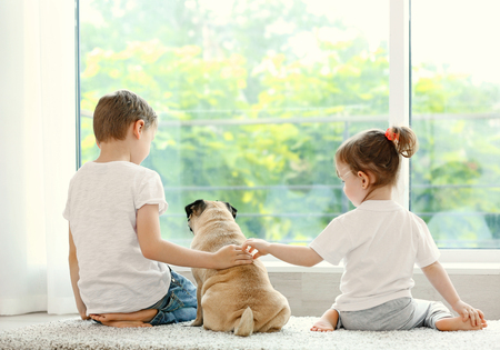 Back of kids and pug at home Stockfoto