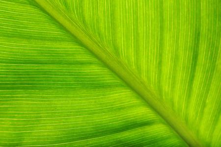 Green leaf, macro view