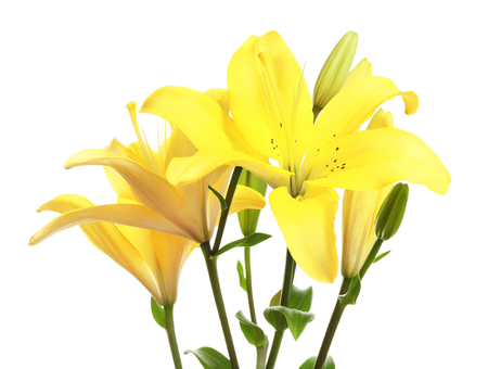 Beautiful lilies isolated on white Foto de archivo