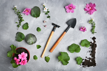 Gardening tools and flowers on grey textured background Standard-Bild